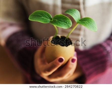 Cucumber sprouts growing from an egg shell. Children's hands hold it
