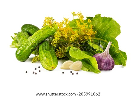 cucumbers, garlic, pepper, horseradish leaves and fragrant blossoms dill marinade on a white background - stock photo