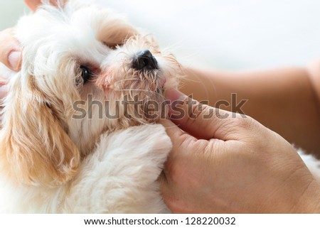 Cuddling pet dog with love - stock photo