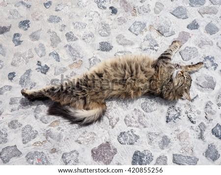 cuddly cat 2 - stock photo