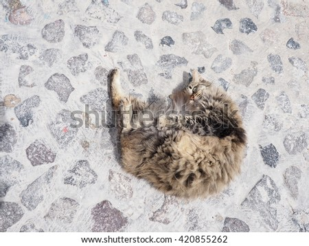 cuddly cat - stock photo