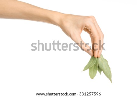 Culinary seasoning and cooking theme: man's hand holding a dry bay leaves on white isolated background in studio - stock photo
