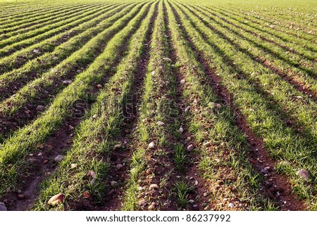 Cultivated field - stock photo
