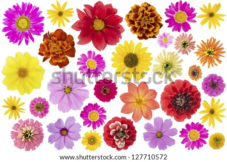 Cultivated garden and wild simple flowers big set isolated on white. Top view macro.