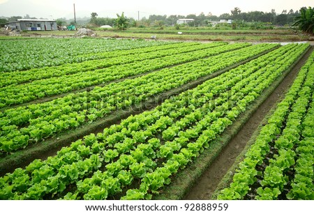 Cultivated land - stock photo