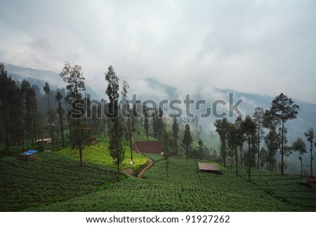 Cultivated land in a mountains. Java island Indonesia. - stock photo