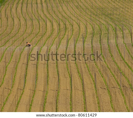 Cultivated land in a rural landscape, Euskadi