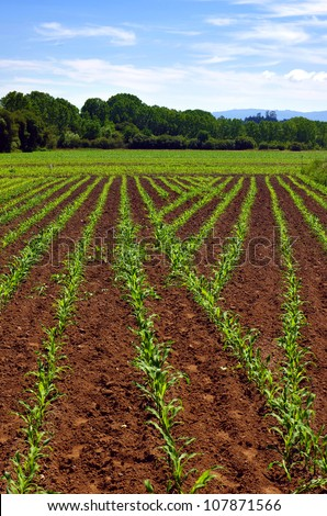 Cultivated land in a rural landscape in a bright sunny day - stock photo
