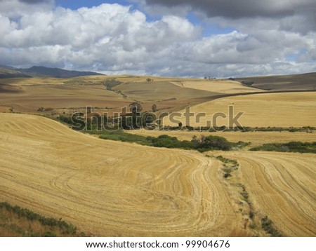 Cultivated landscape after harvest with furrows of tractor in South Africa - stock photo