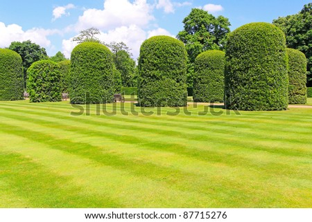 Cultivated lawn and green plants in park