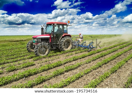 Cultivating field of young soybean crops with row crop cultivator machine - stock photo