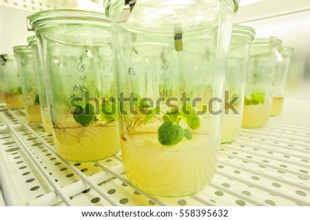 Cultivation of plants in glass tubes in laboratory environment