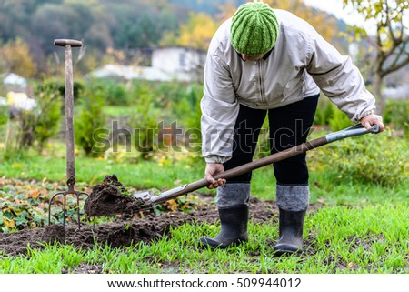 Cultivation of the garden. Farmer digging soil, preparing for planting. Gardening in autumn.