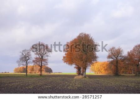 Cultural landscape with oak trees, Drenthe, The Netherlands. - stock photo