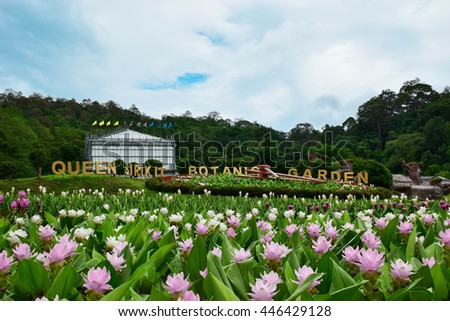 Attractive Curcuma Flowers In Front Of Greenhouse Complex At Queen Sirikit Botanic  Garden, Chiang Mai,