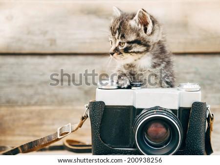 Curiosity little kitten with old photo camera on wooden background - stock photo