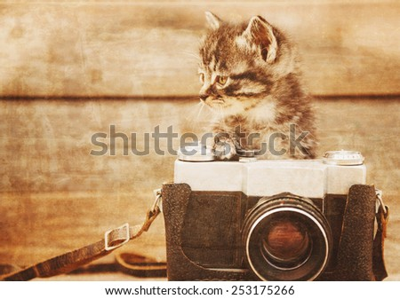 Curiosity little kitten with old photo camera on wooden background. Vintage image
