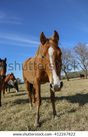 curious and free horse - stock photo
