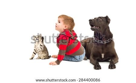 Curious boy, Staffordshire terrier and kitten Scottish Straight sitting together isolated on white background - stock photo