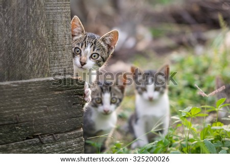 Curious but shy kittens - stock photo