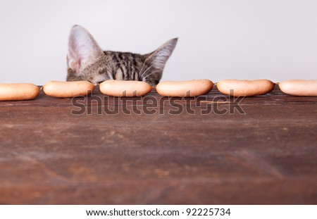 Curious Cat being tempted by sausages on table - stock photo