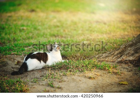 Curious cat lying under the tree - stock photo
