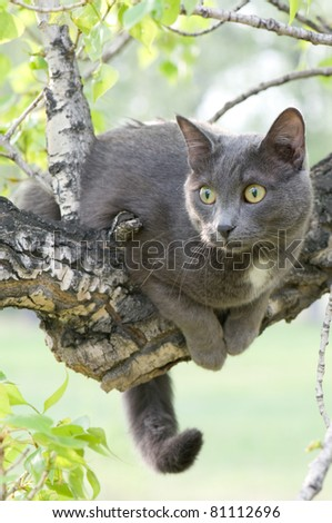curious cat on a tree - stock photo