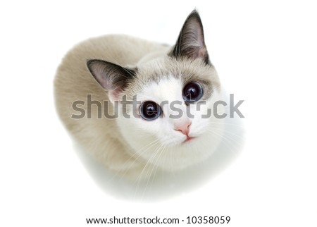 Curious cat shot from above looking up isolated - stock photo