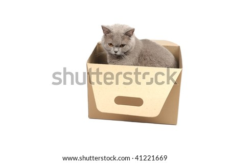 Curious cat sitting in box on a white background