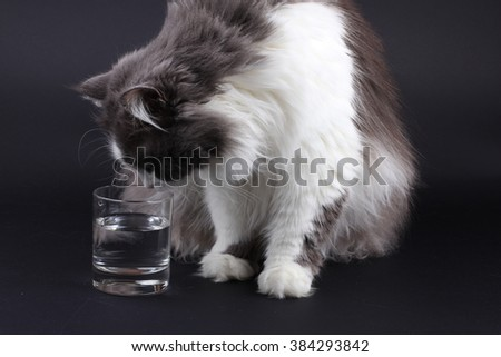 Curious cat standing up on its hind legs looking inside a glass of water - stock photo