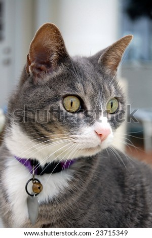 Curious cat stare - stock photo