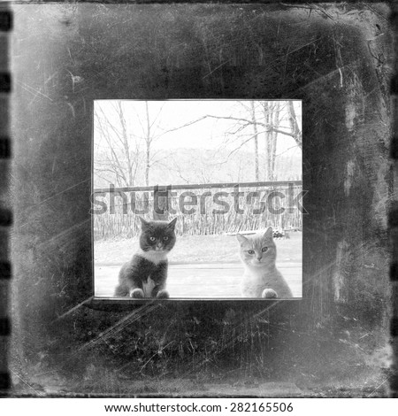 curious cats looking through the window, blurry unfocused black and white medium format film background with grain and light leak - stock photo