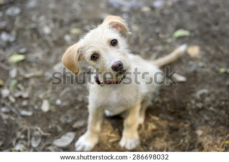 Curious dog looking up with adorable face and cute animal eyes. - stock photo