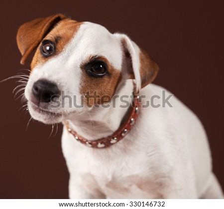 Curious dog. Puppy at brown background - stock photo