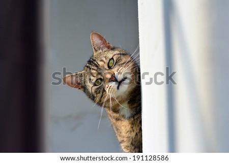 Curious funny cat - stock photo