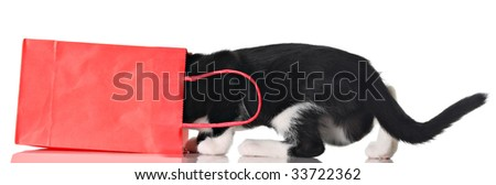 Curious kitten in a red bag. - stock photo