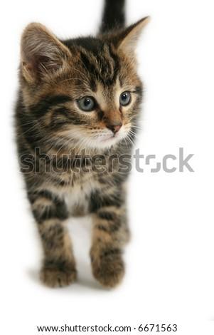 Curious kitten isolated on white - stock photo
