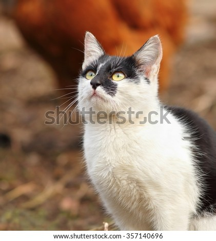 curious kitten portrait looking in the sky direction - stock photo