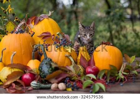 curious kitty in autumn decoration - stock photo