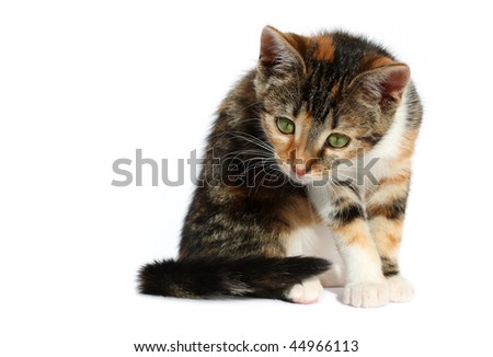curious little cat looking at something on the ground - stock photo