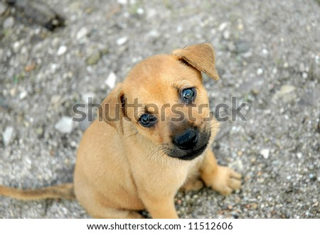 Curious little pup - stock photo