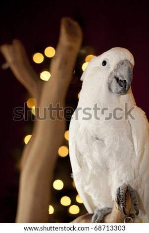 Curious parrot over Christmas blurry tree. - stock photo