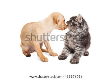 Curious puppy meeting a kitten and sniffing her. Isolated on white.