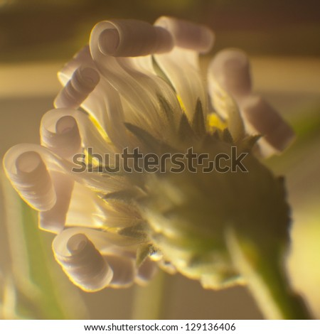 Curly wildflower. - stock photo