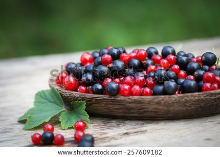 currant black blue and red in garden - stock photo