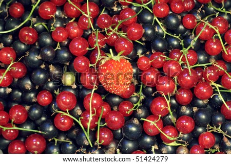 Currants with a strawberry on top - stock photo