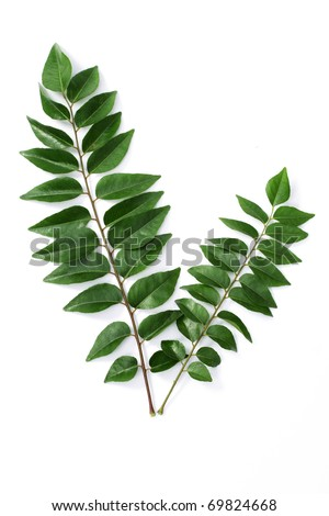 Curry leaves on white - stock photo