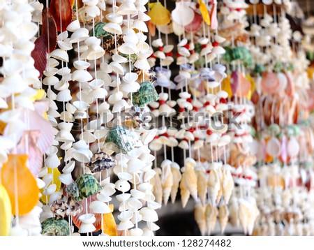 curtain shells on beach in Thailand - stock photo