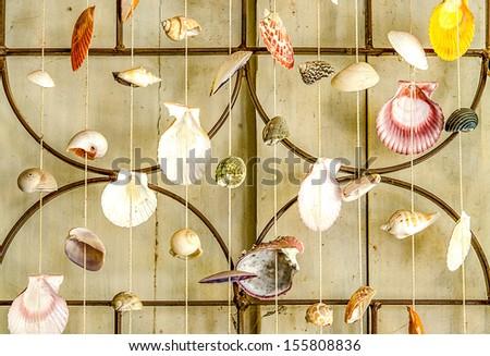 Curtains of Sea shells - stock photo