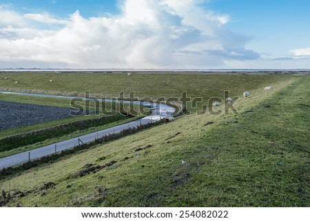 Curved country road next to a high dike with grazing sheep. It is winter and there is a small remnant of the snow. - stock photo